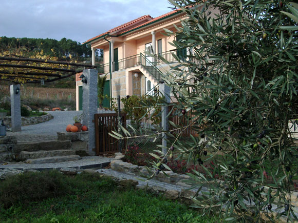 The holiday house with olives